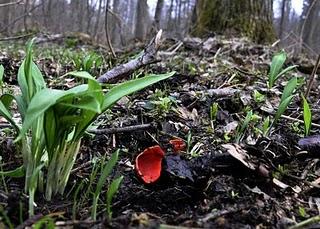 Остановить вырубку леса в Беловежской пуще на время гнездового сезона птиц (Польша)