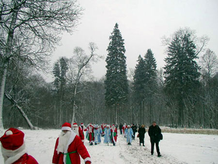 A Christmas spruce tree in the estate of Grandfather Frost in Belovezhskaya Pushcha